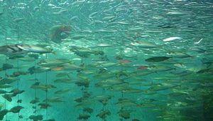 Aquarium02