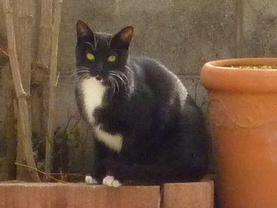 20130423blackcat