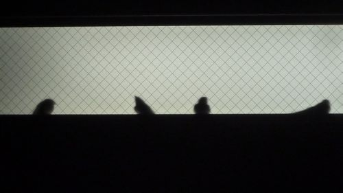 20130807swallows