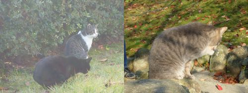 20131116cats