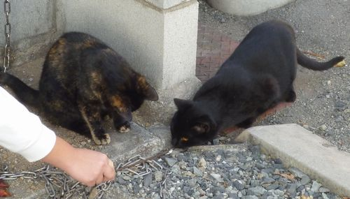 20131208cats