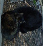 20131215cats