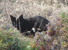 20140106blackcat