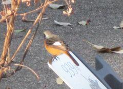 20140111bird