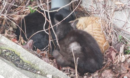 20140302treecats