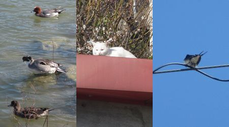 20140321birdscat
