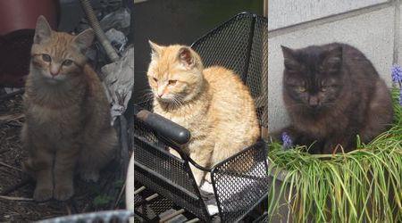 20140322treecats