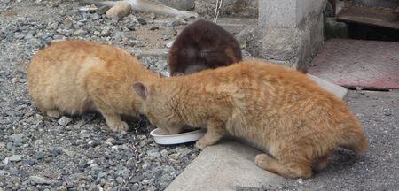 20140419treecats