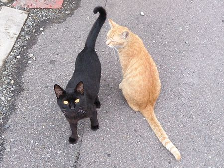 20140809cats