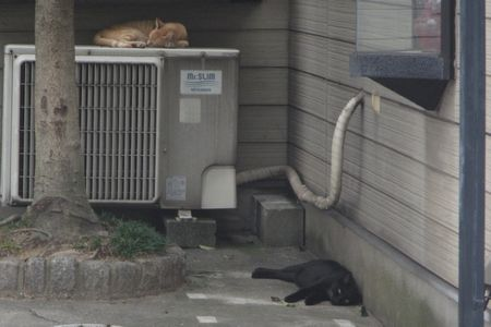 20140906cats