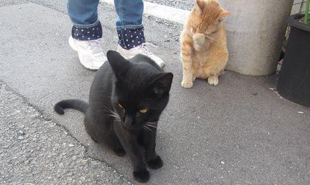 20140922cats