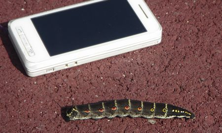 20140922worm