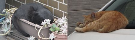 20140924cats