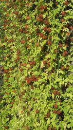 20140928plants