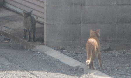 20140929cats
