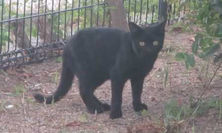20140930blackcat