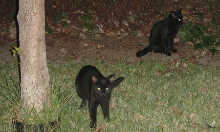 20141009blackcats