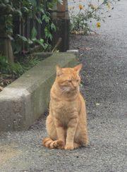 20141101cat