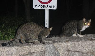 20141105catsofnight