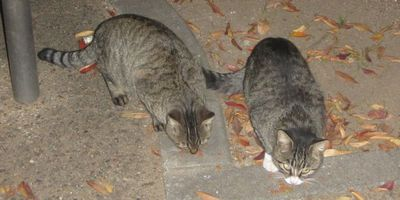 20141112catsofnight