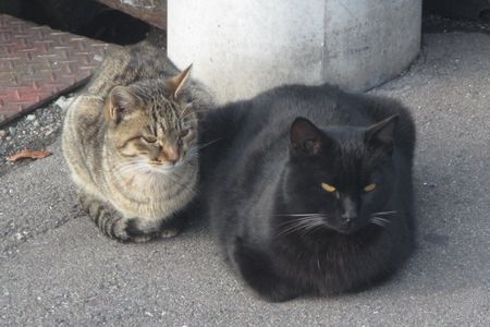20141229cats