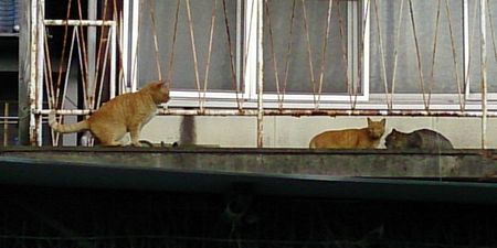 20150110cats
