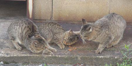 20150321cats