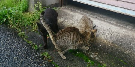 20150418cats
