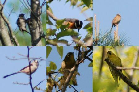 20150426birds