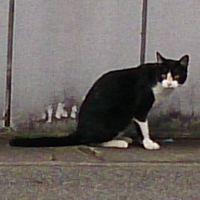 20151005cat