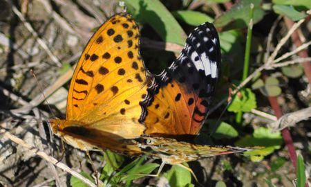 20151017butterflies