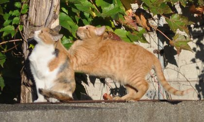 20151026cats