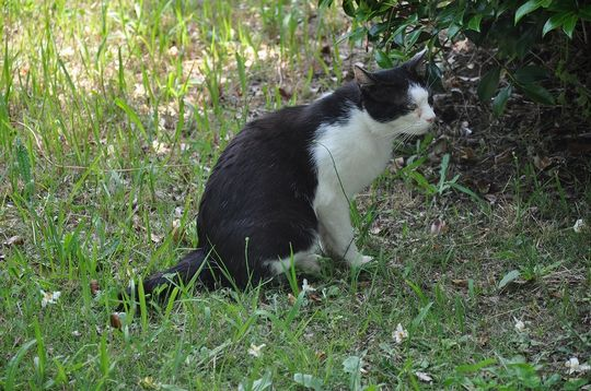 20170609cat_at_the_nmjh_2